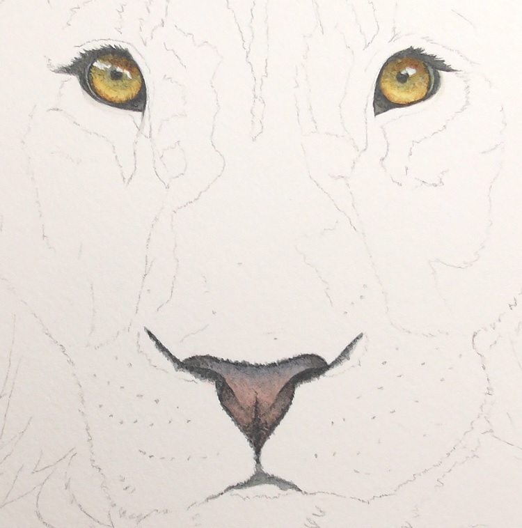 lion eyes, nose by rebecca rhodes