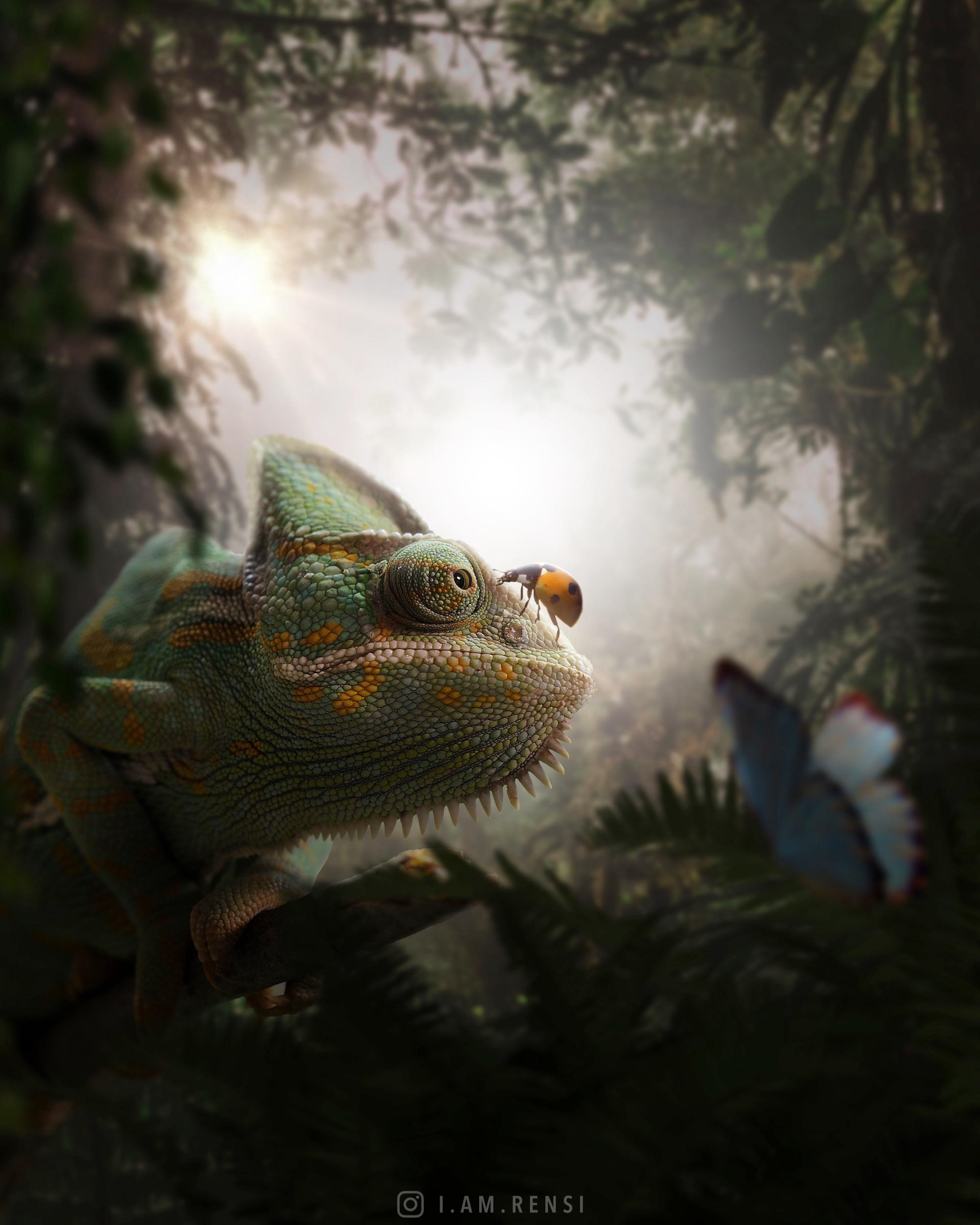chameleon_ladybug_photo-manipulation