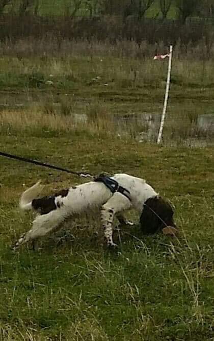 Dog Training Cadaver