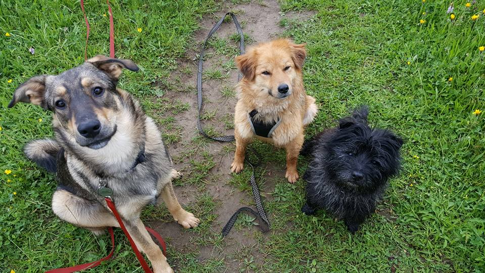 Romanian rescue dogs