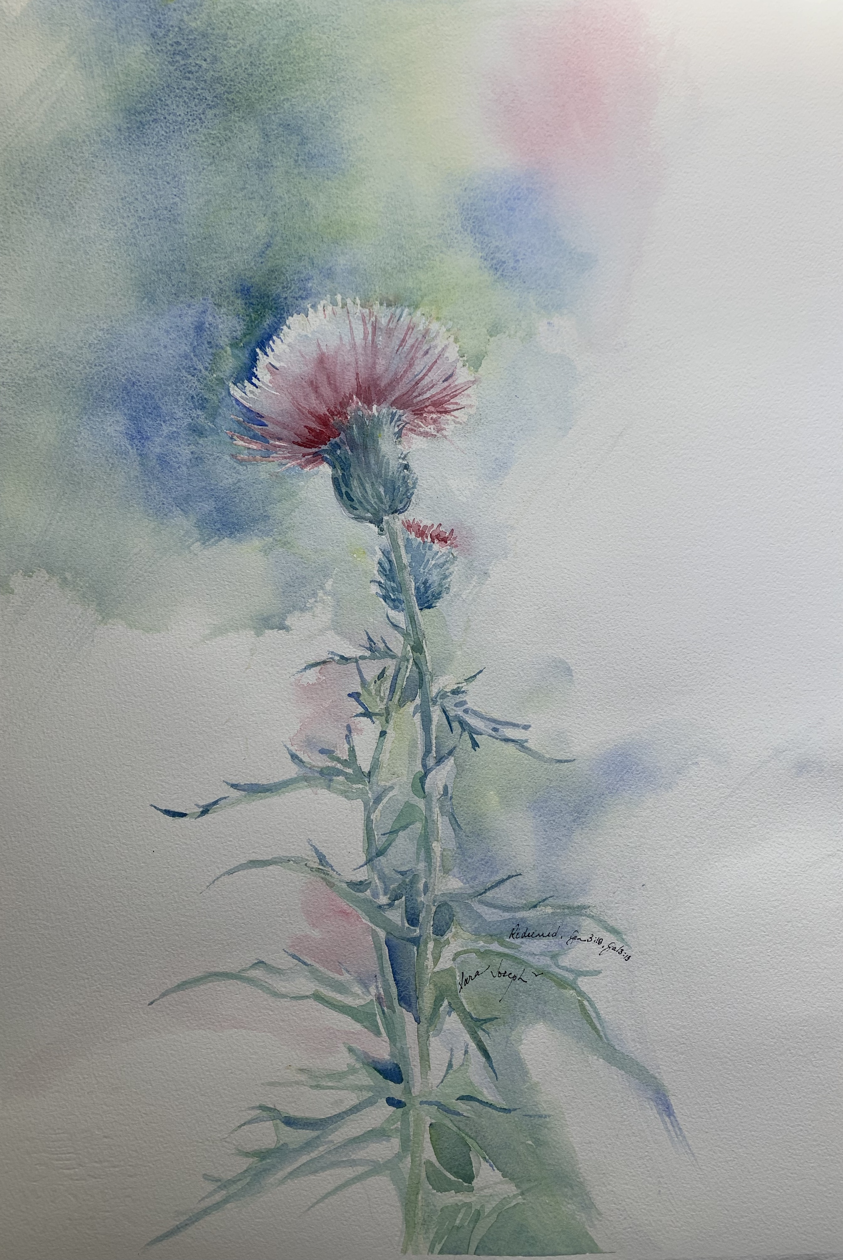 Thistle, Watercolor