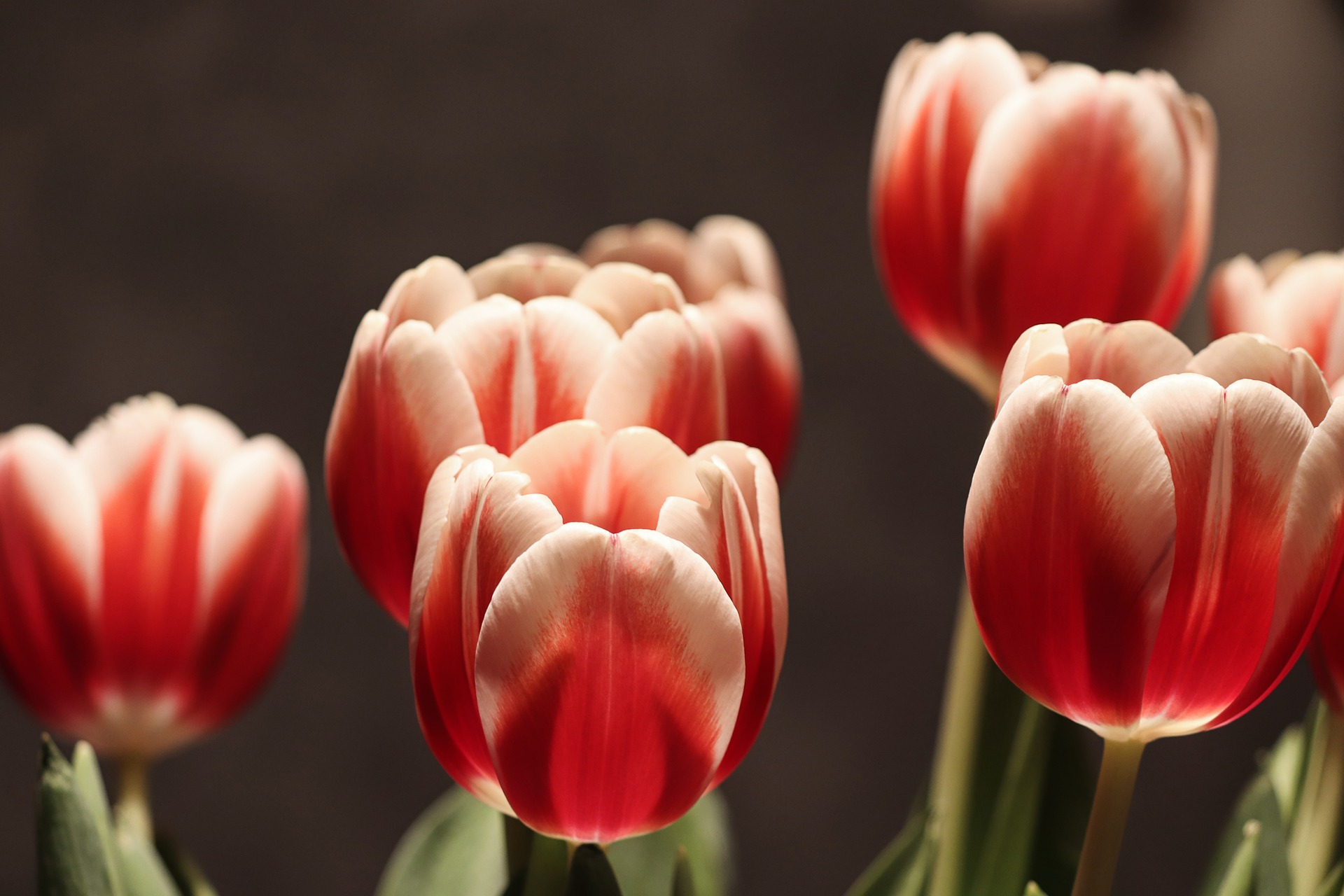 Flower Fridays: Just Tulips