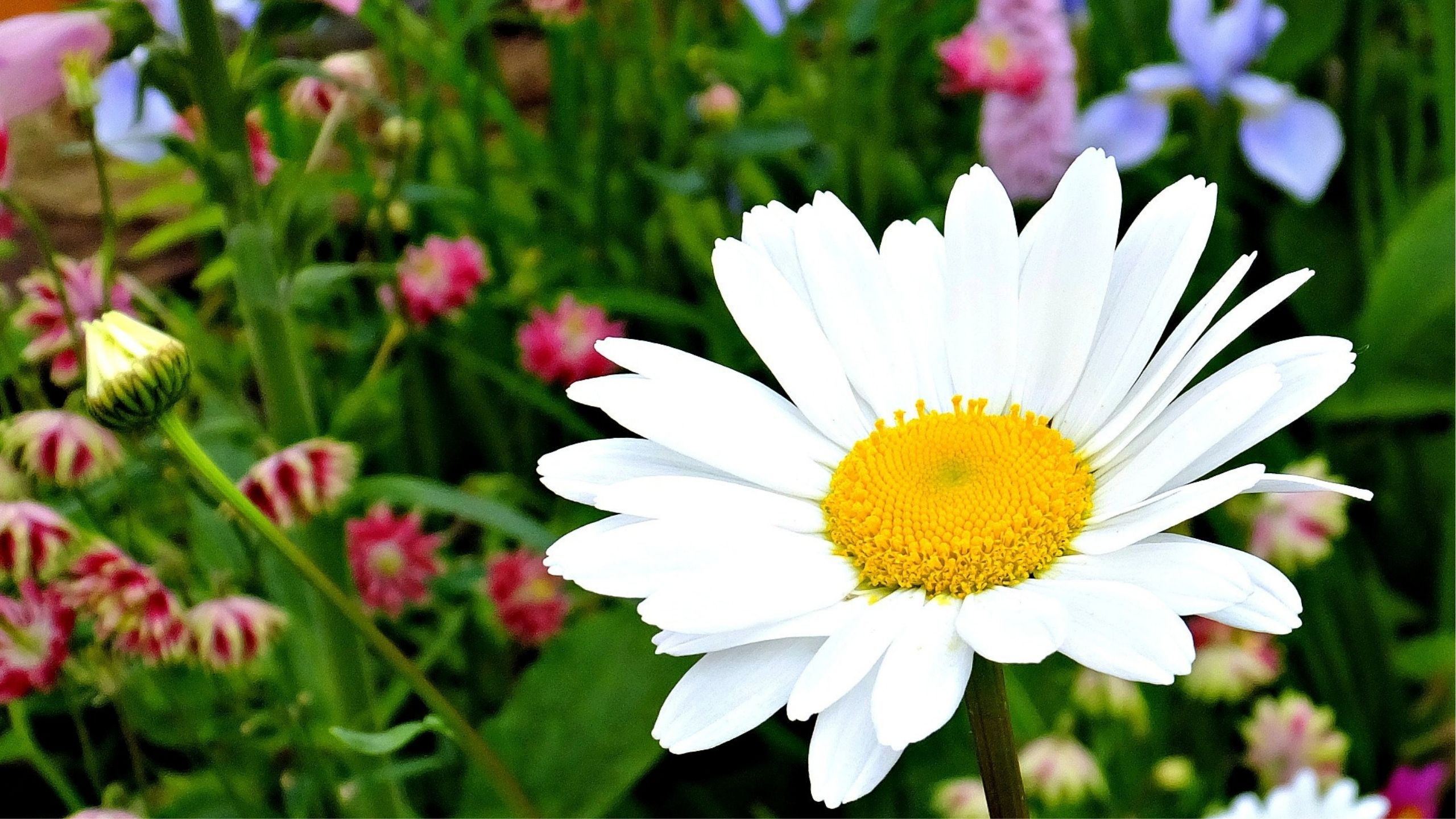 Reiki Healing for You Meditations