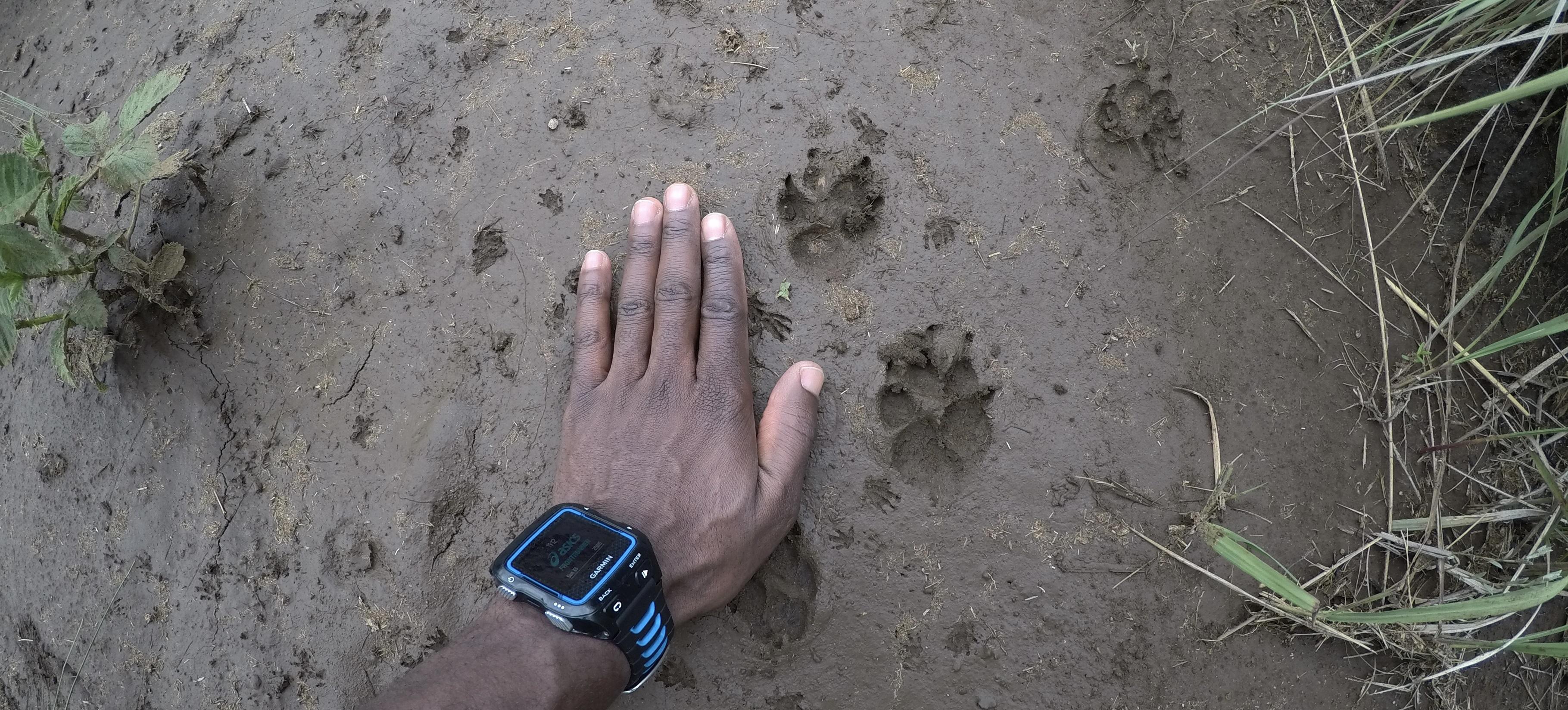 Wildlife ACT course