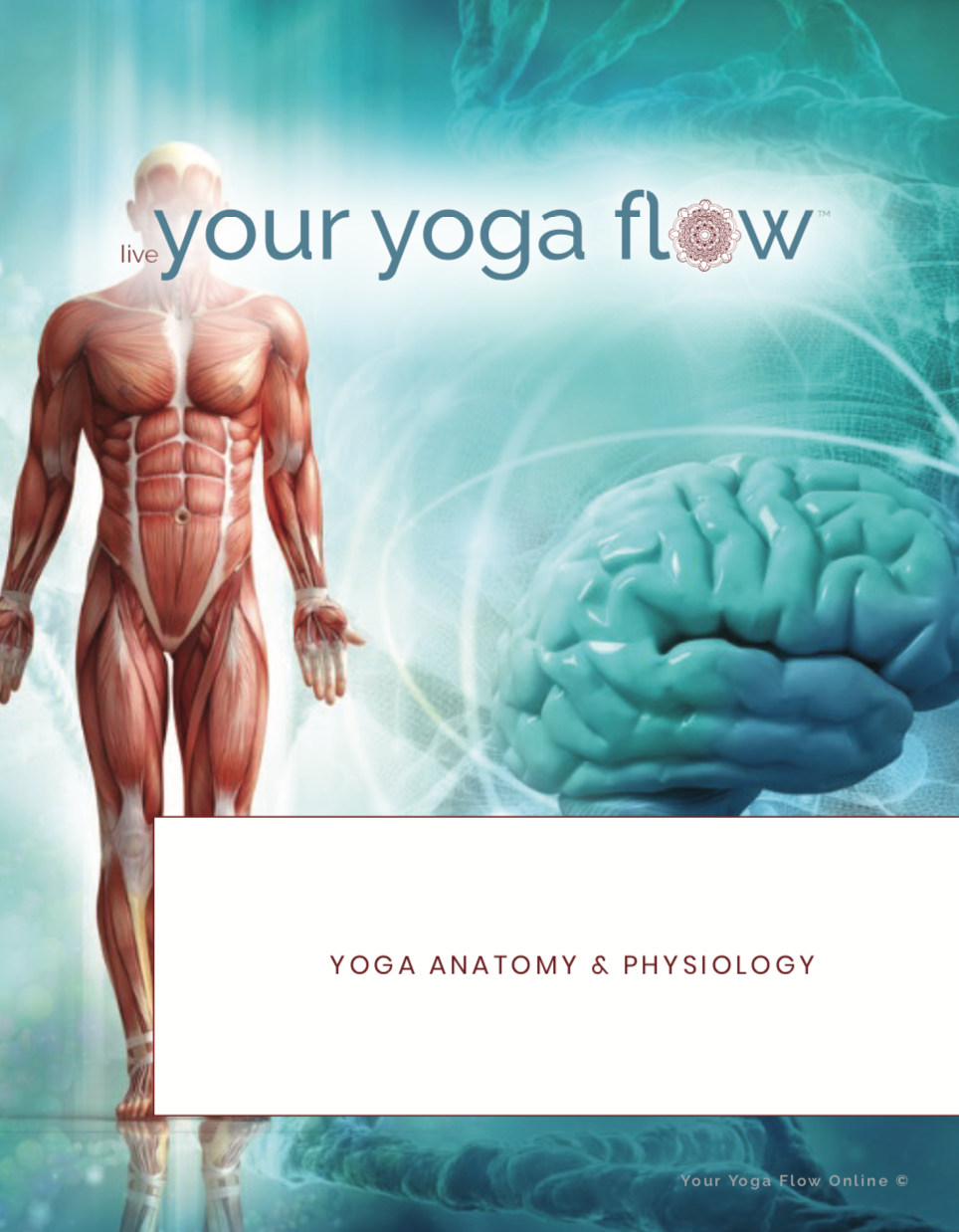 yoga teacher training anatomy manual