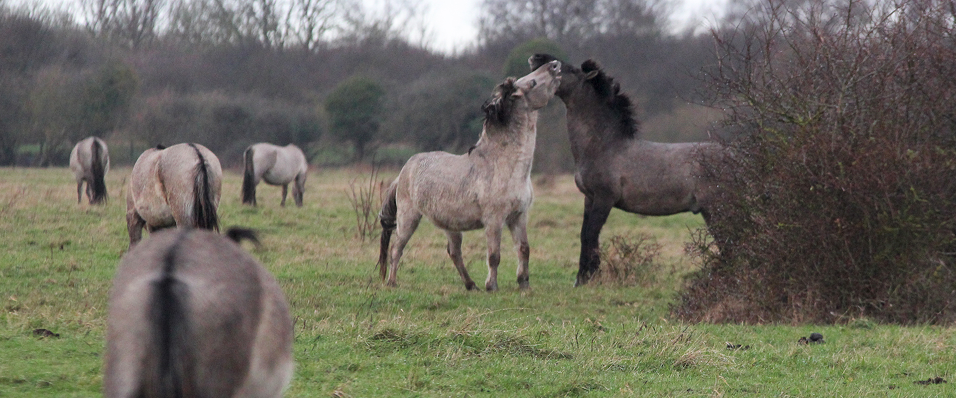 horses interacting