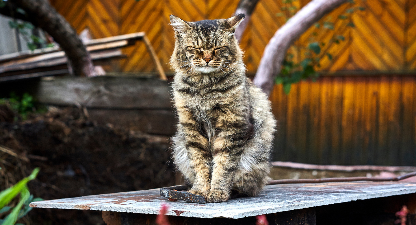 How to care for your ageing cat?