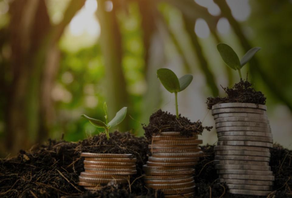 Agrofinanzas