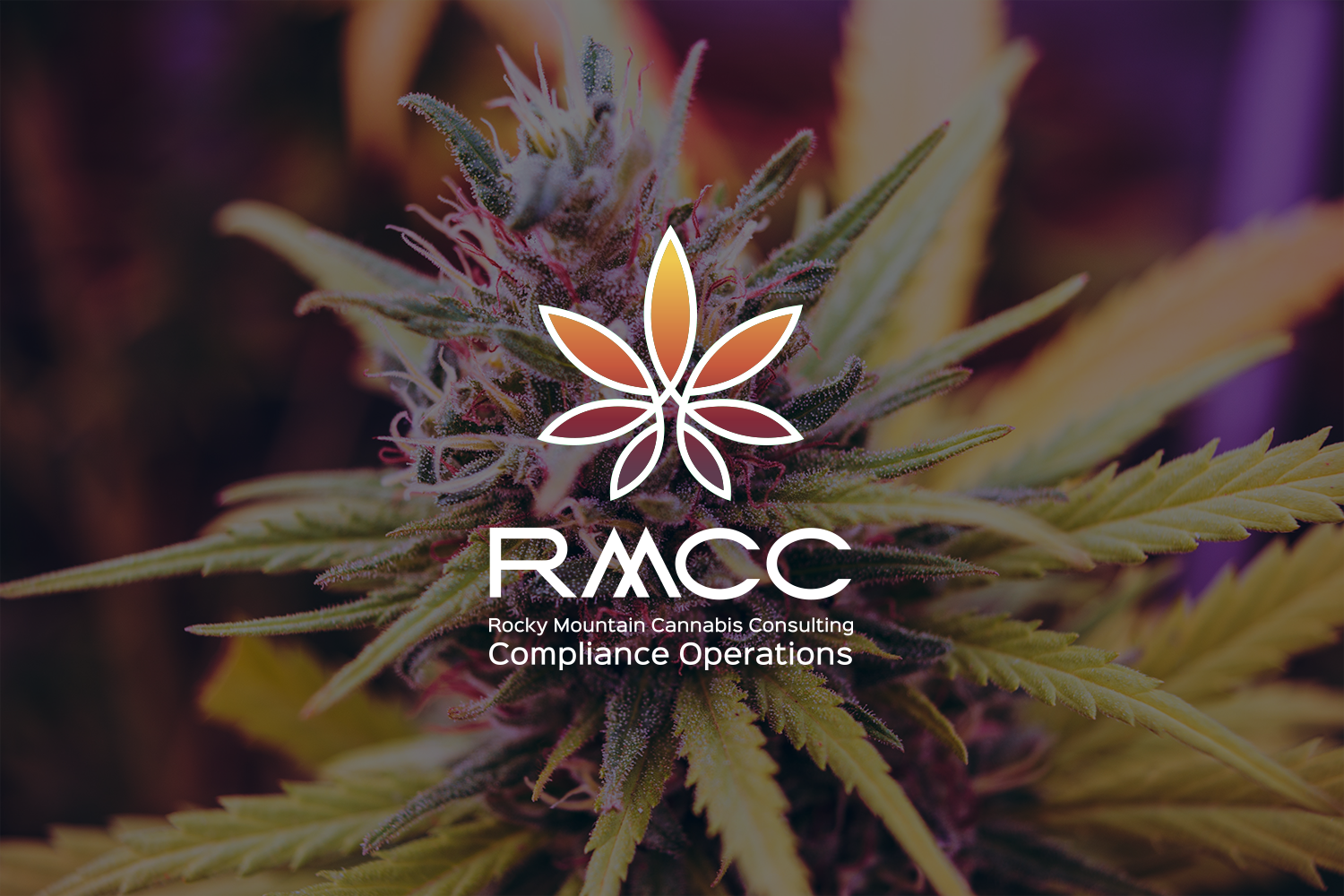 Rocky Mountain Cannabis Consulting Compliance Operations Experts
