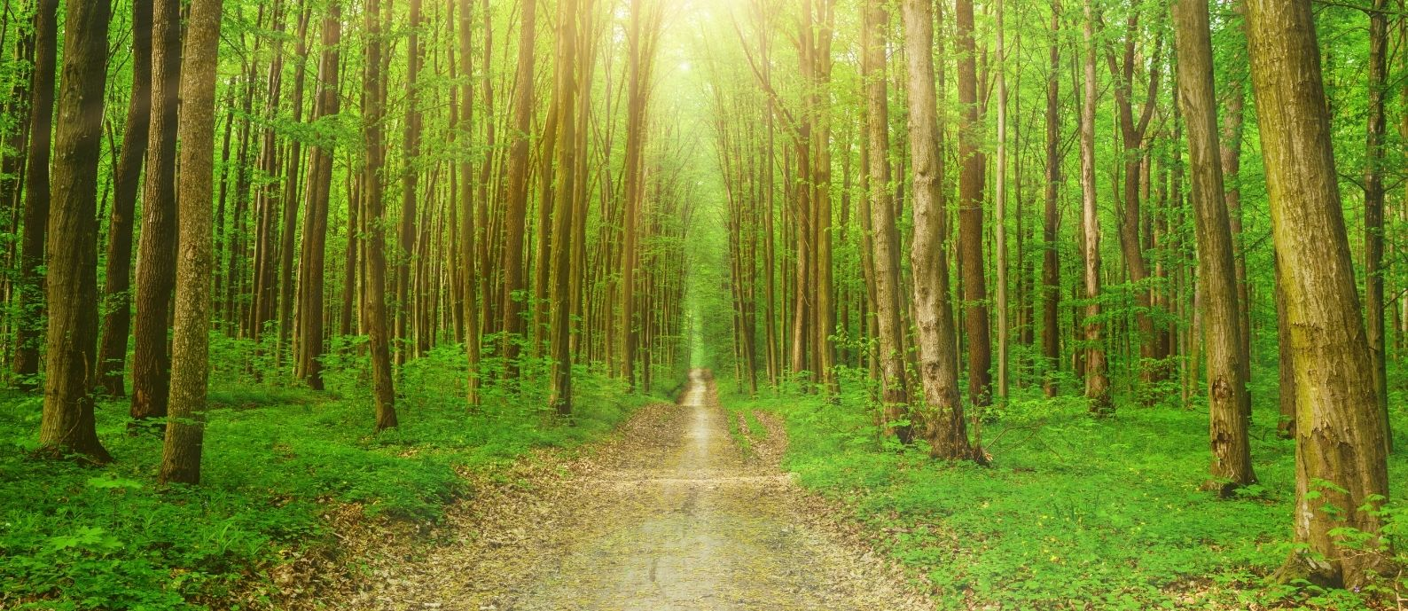 Green Intervention and Dementia