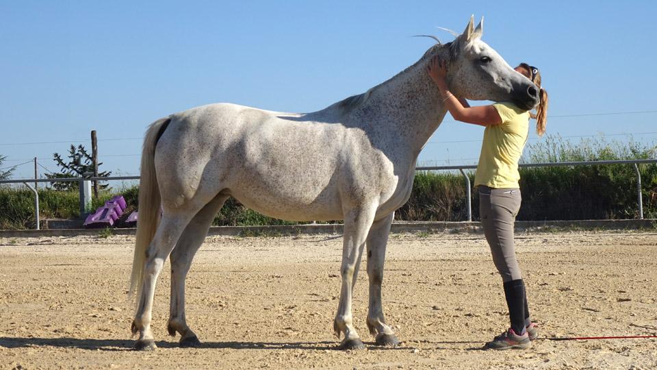Comprendre son cheval et améliorer la communication avec lui