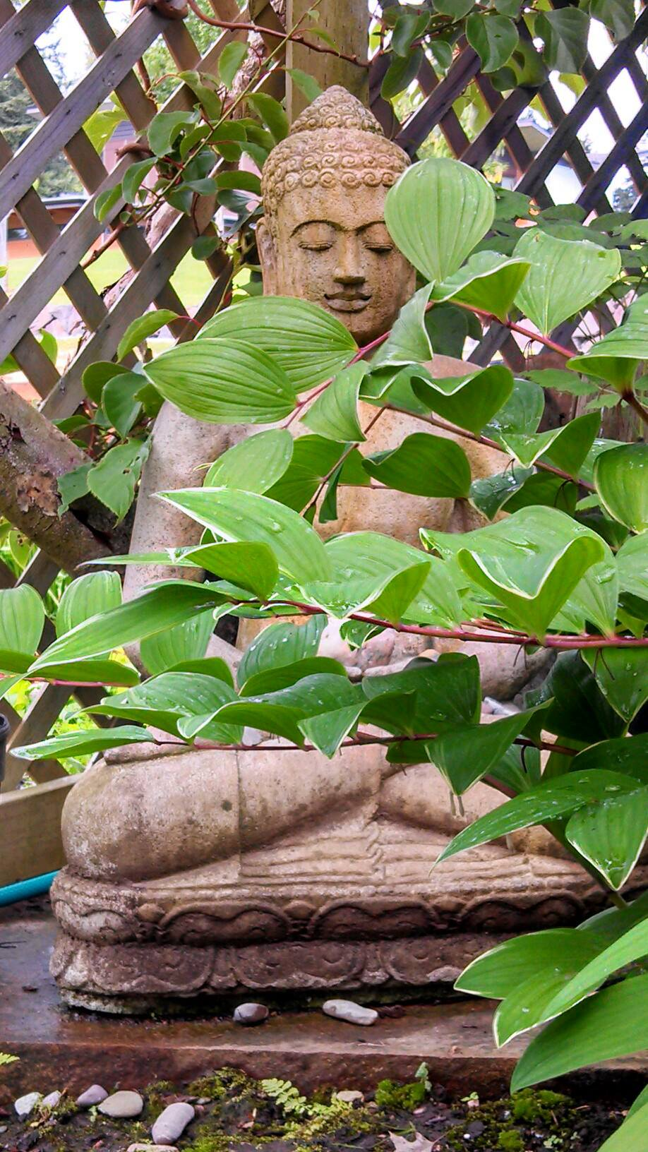 Buddha and plants