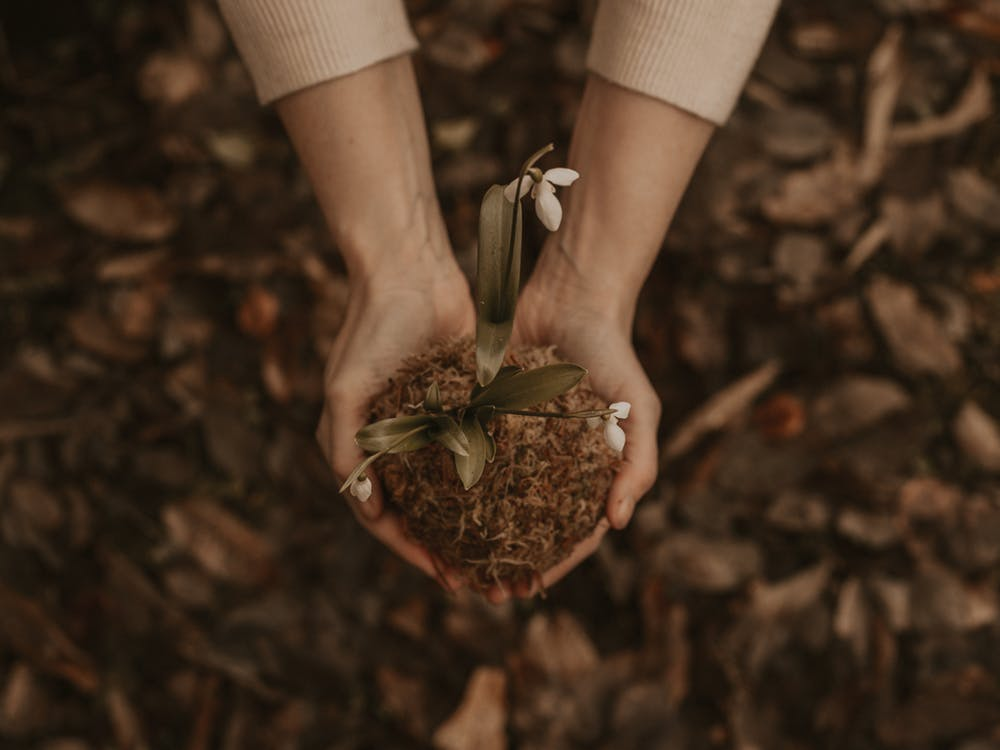 Hands cradling dirt and a small flower