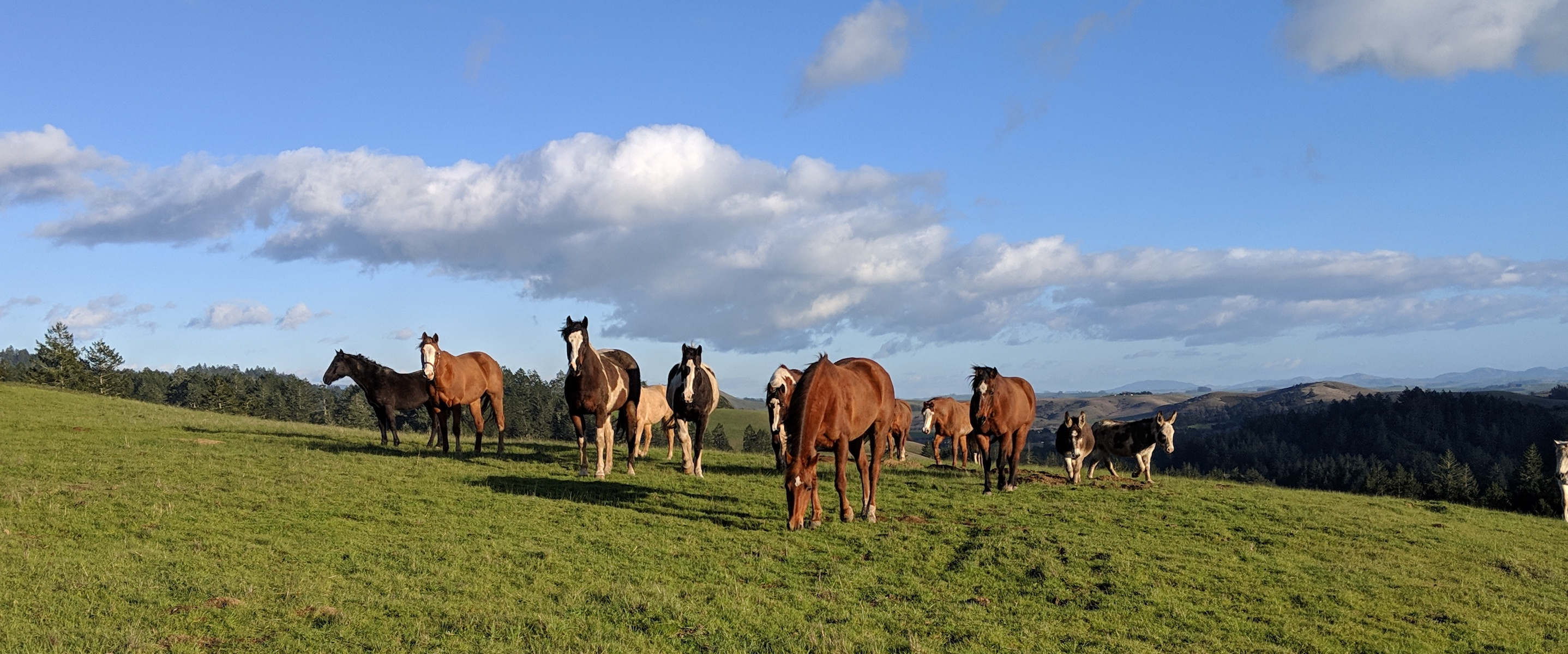 Horses Healing Humans