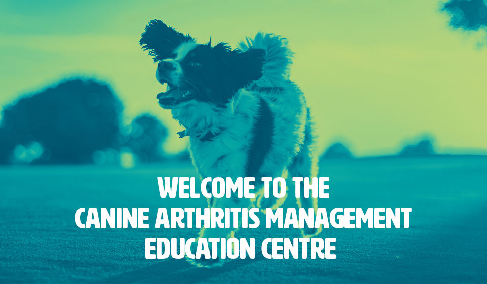 #yourdogmoreyears canine dog arthritis how to treat