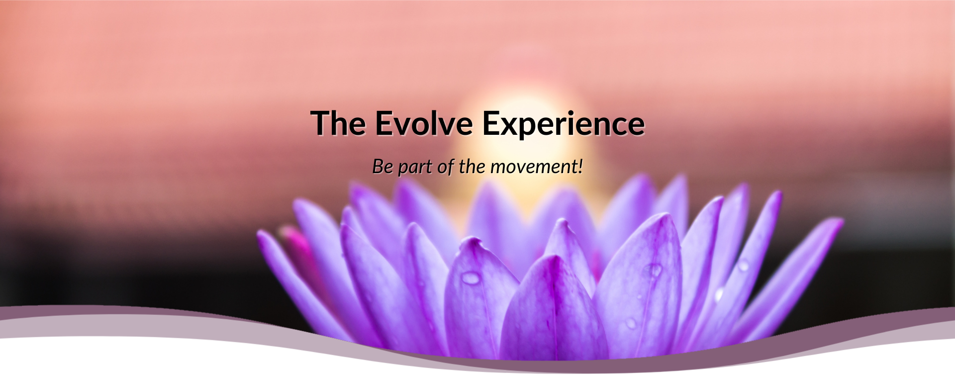 The Evolve Experience
