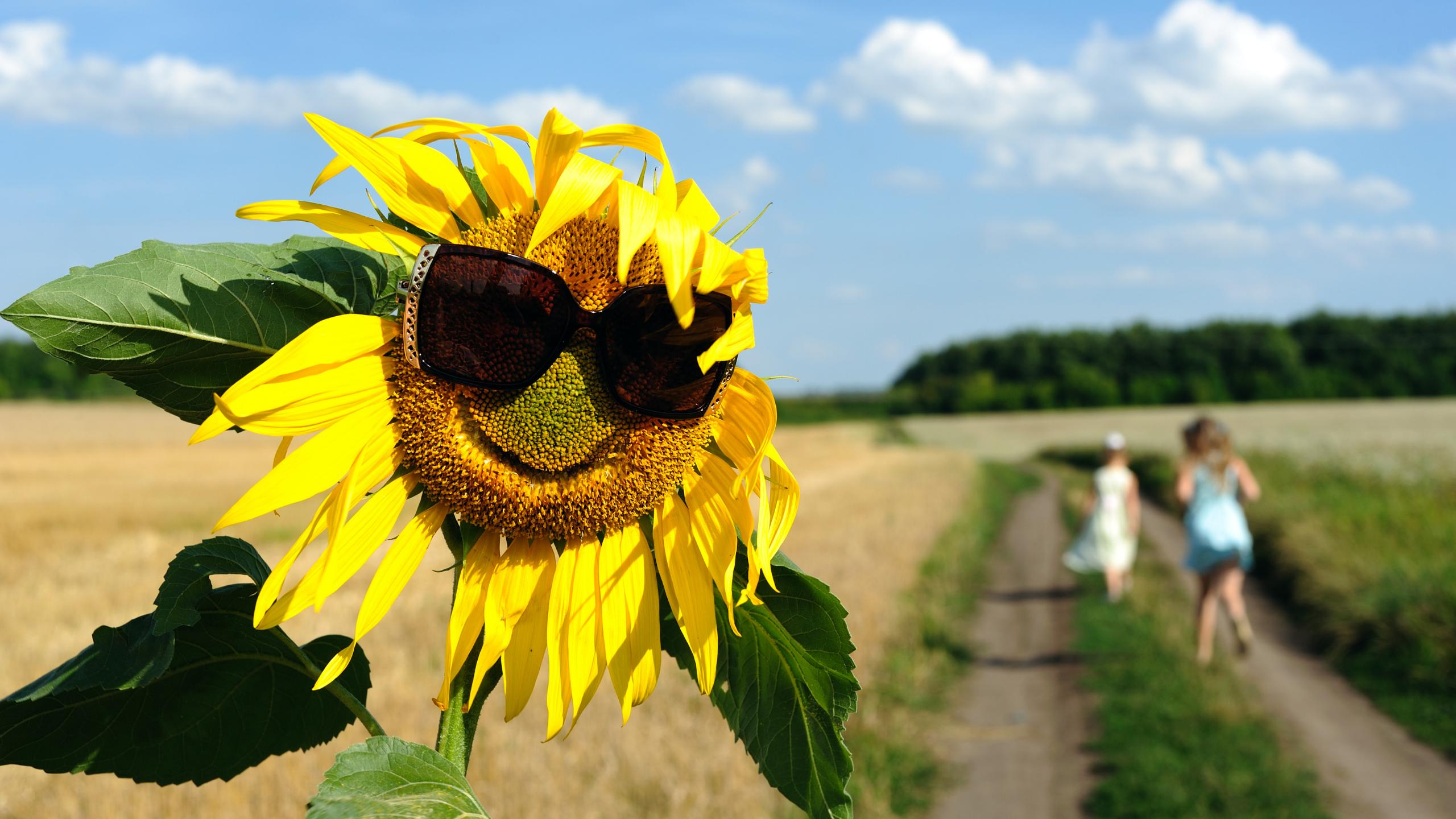 25 Tips to living more Joyfully  - Sue Davies