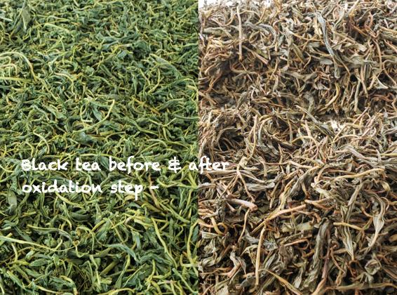 Black Magnolia before & after oxidation