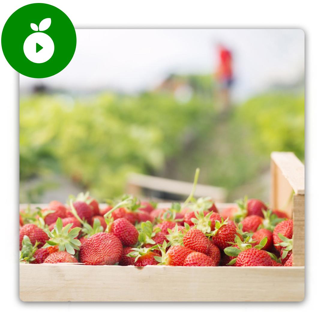 marketing agroalimentario en agromooc