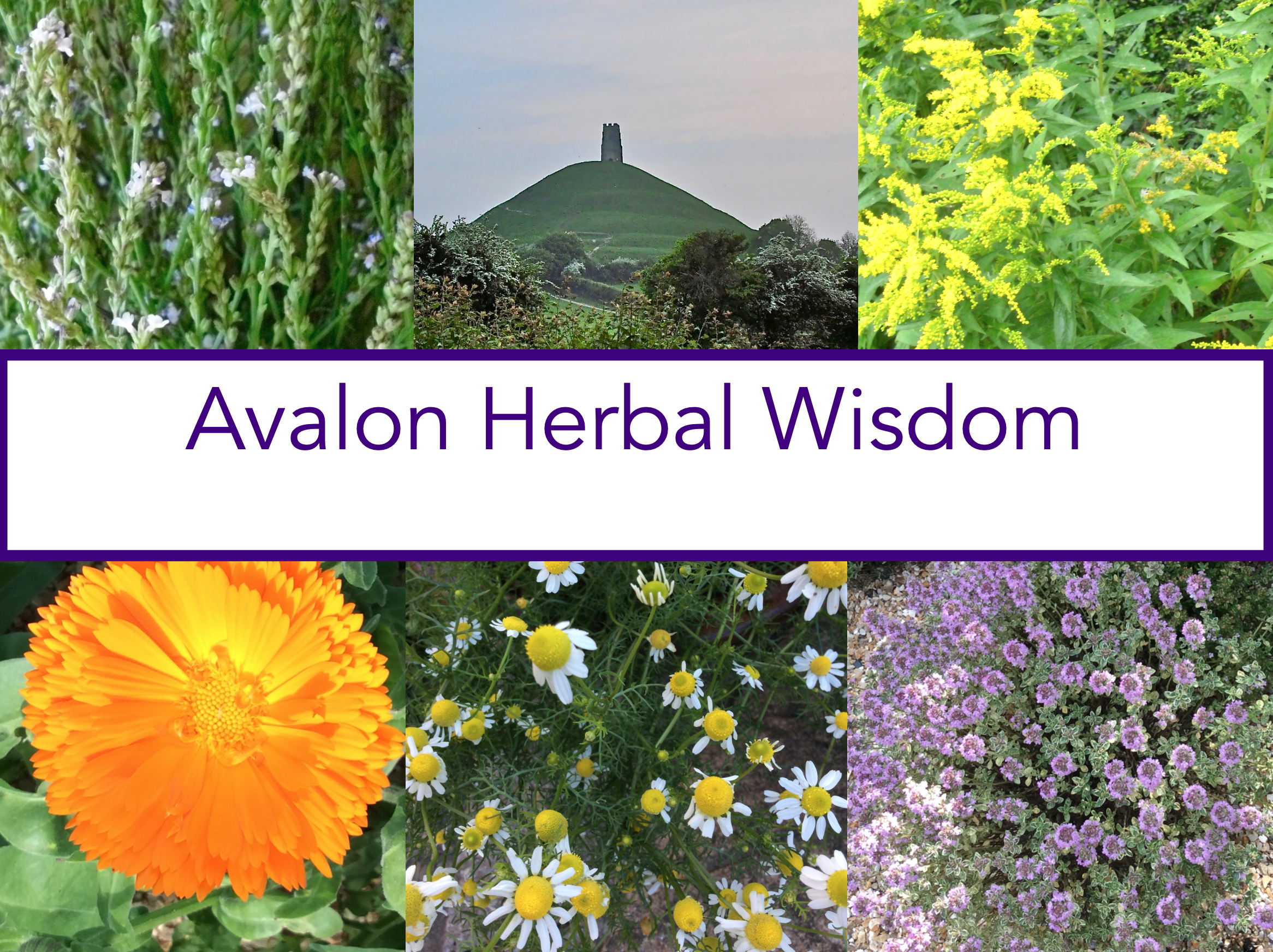 herbs at www.avalonherbalmedicine.com