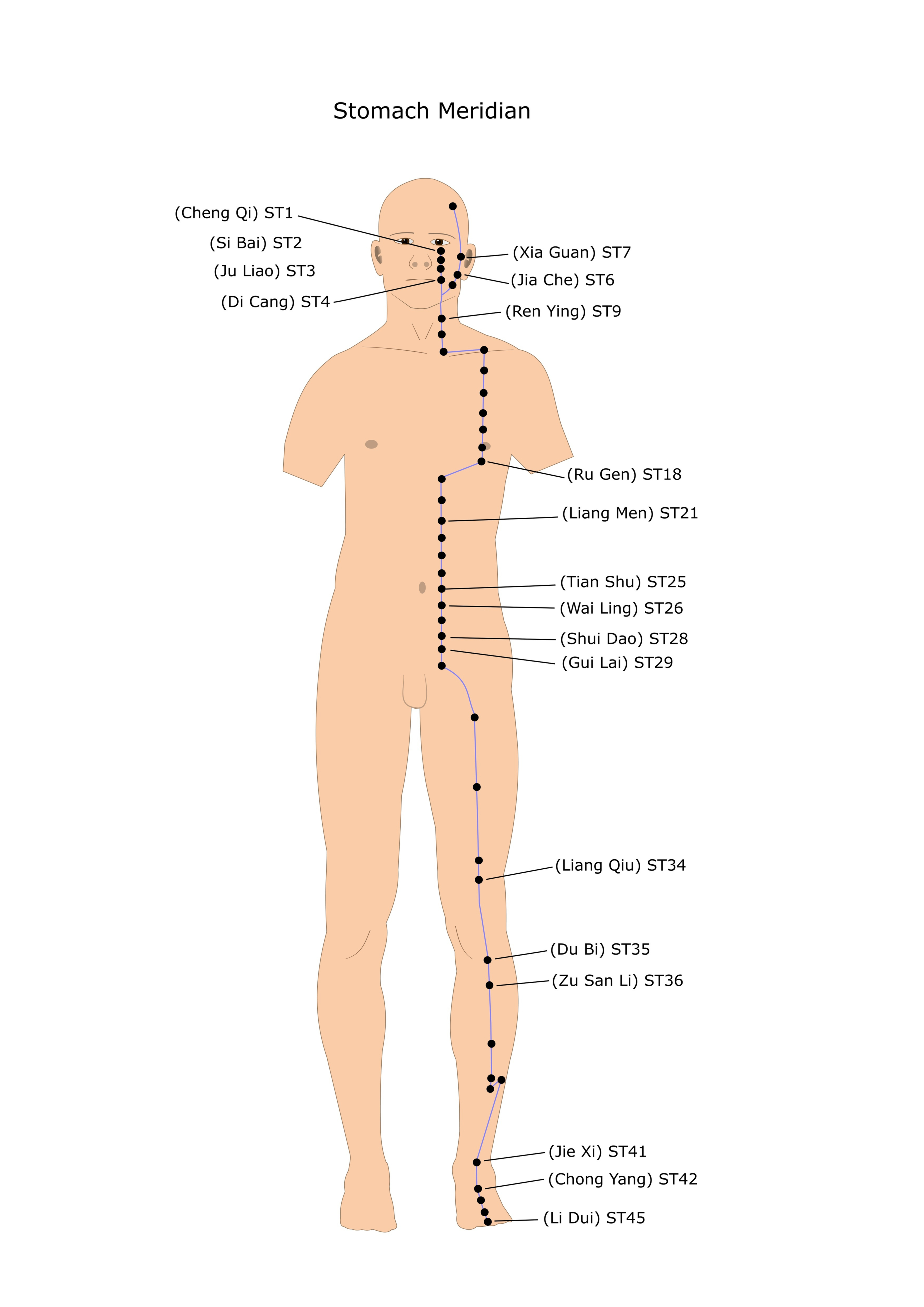Stomach Acupuncture Meridian