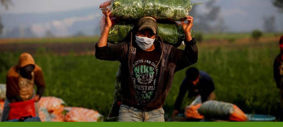 agricultura en la era covid 19