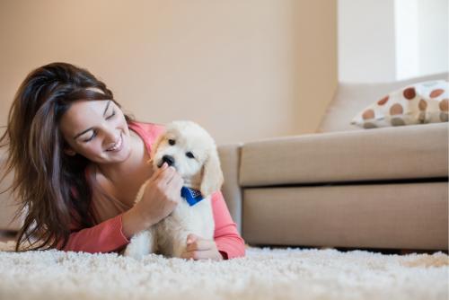 virtual puppy training