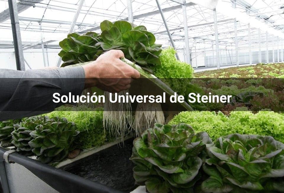 Soluciones Nutritivas: Taller  de Preparación con el Método Steiner