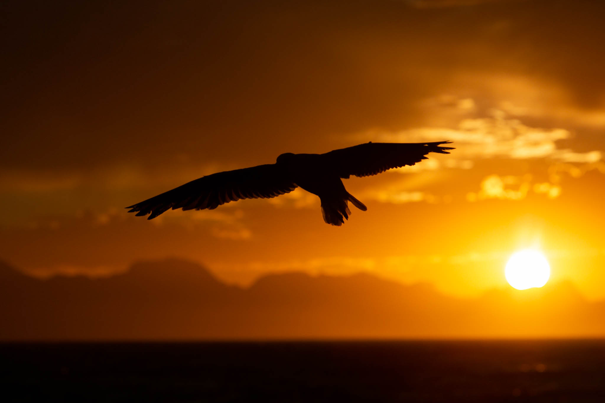 seagul in silhouette at sunrise