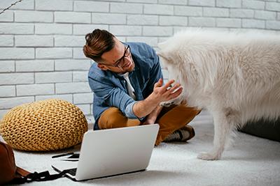 online dog training workshop