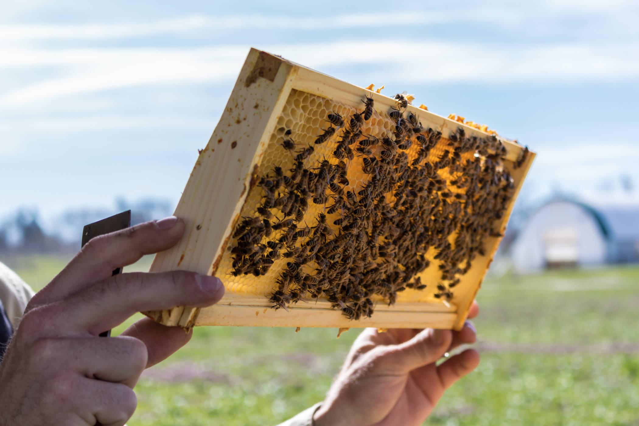 Hobby beekeeping banner