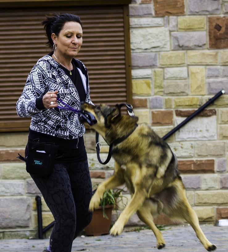 Romanian dog jumping