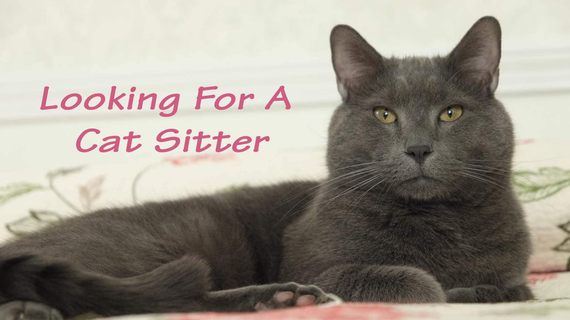 looking for a cat sitter