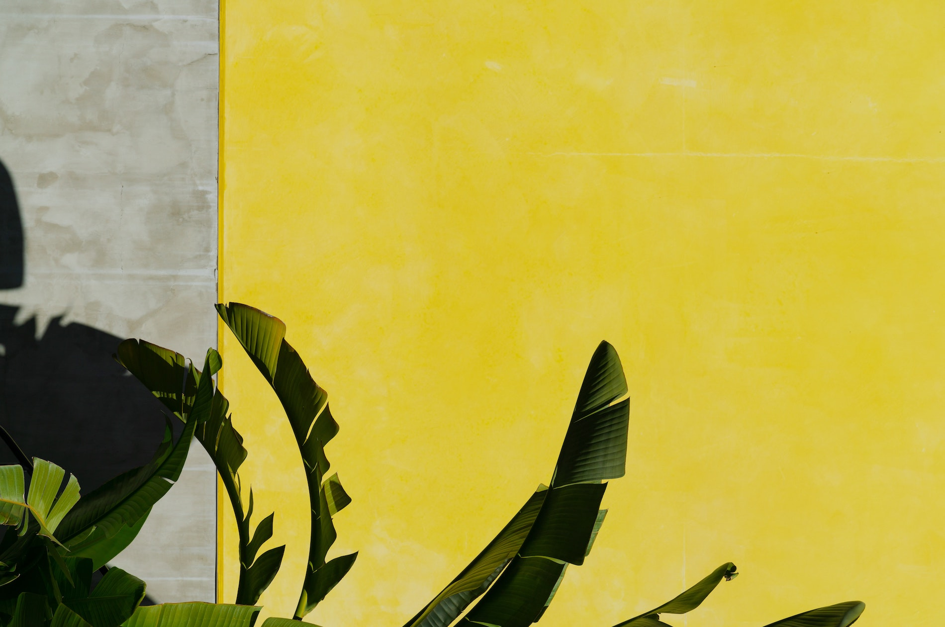 modern and minimal art design photo of green living leaves against natural cement wall