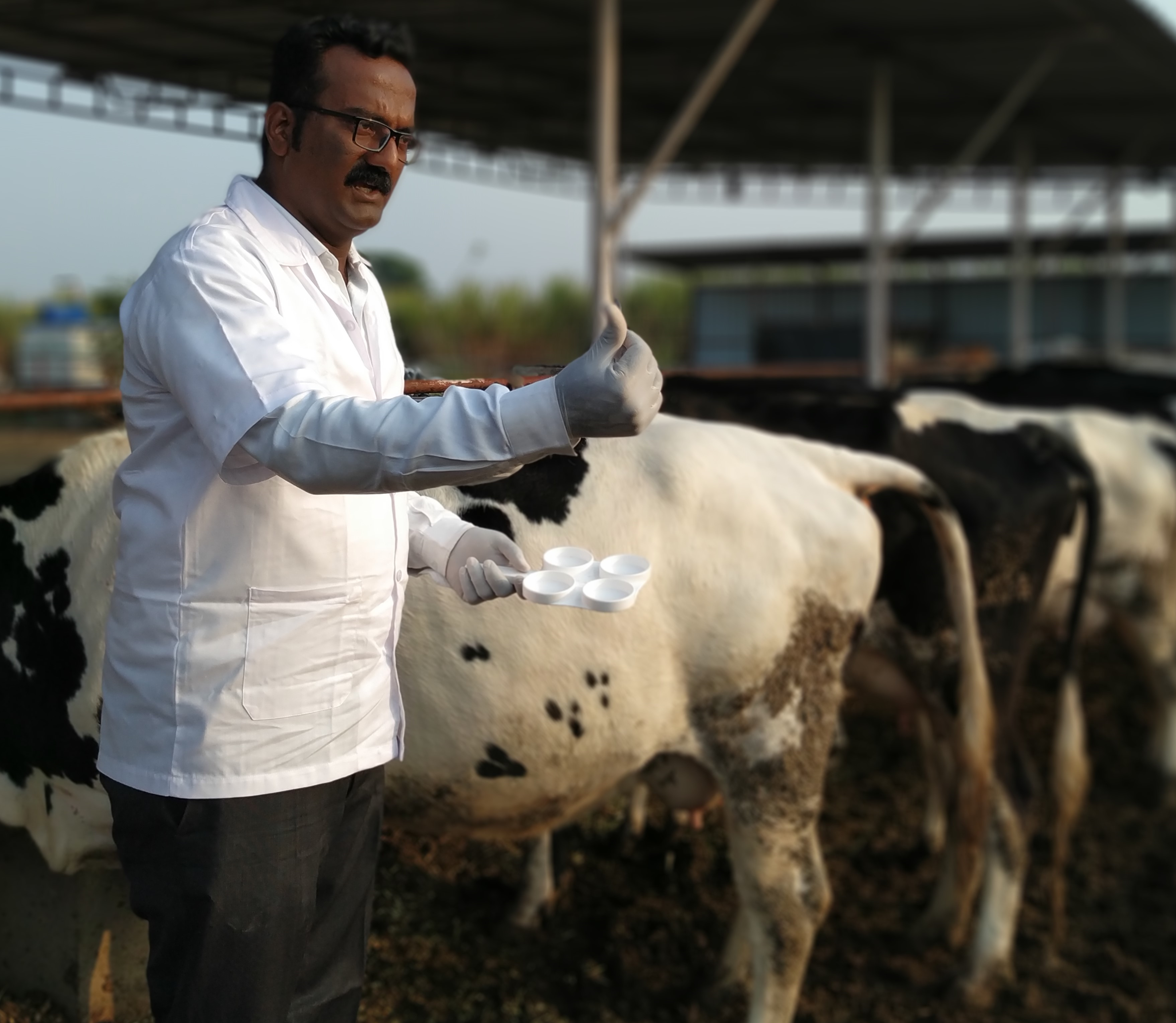 Hire experts in dairy farming