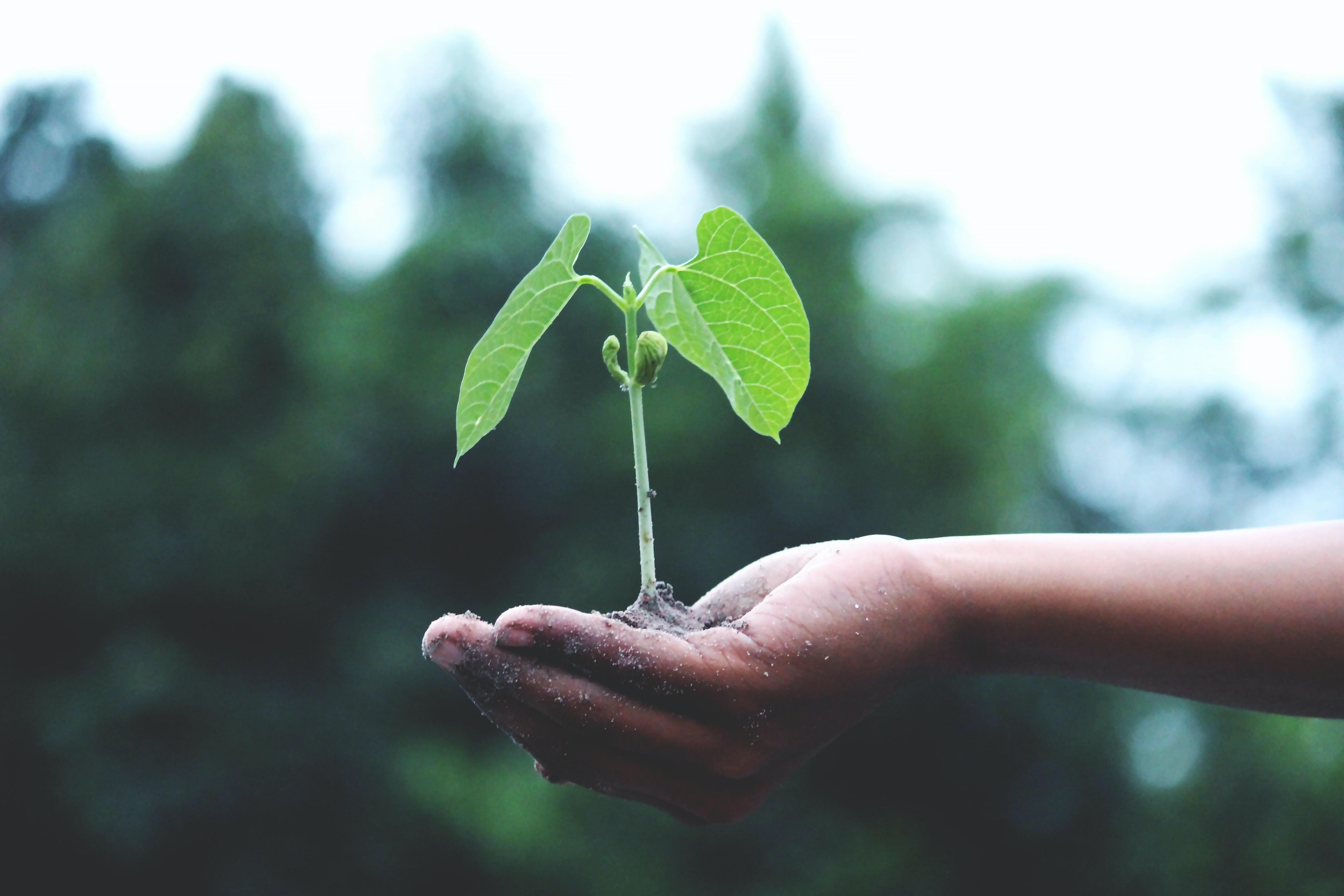 Seed Starting Academy