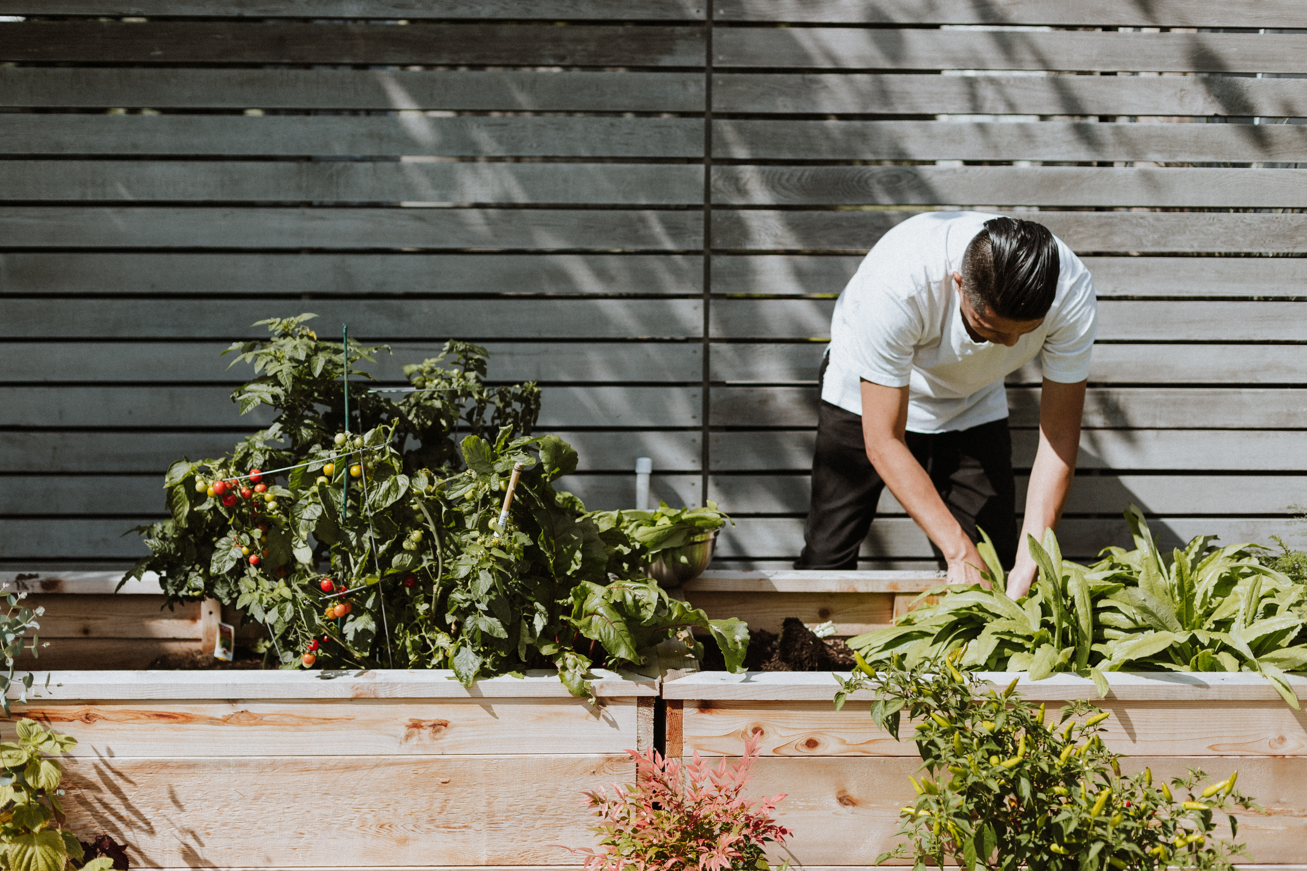 gardening your way to sustainability