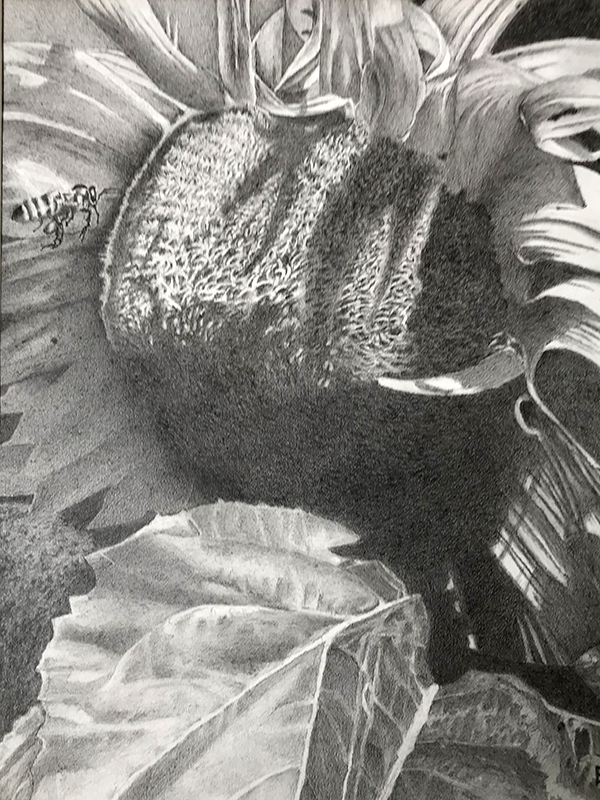 Graphite Drawing of bee and a sunflower, testimonial from student, Rich Turney of RL Caldwell Studio