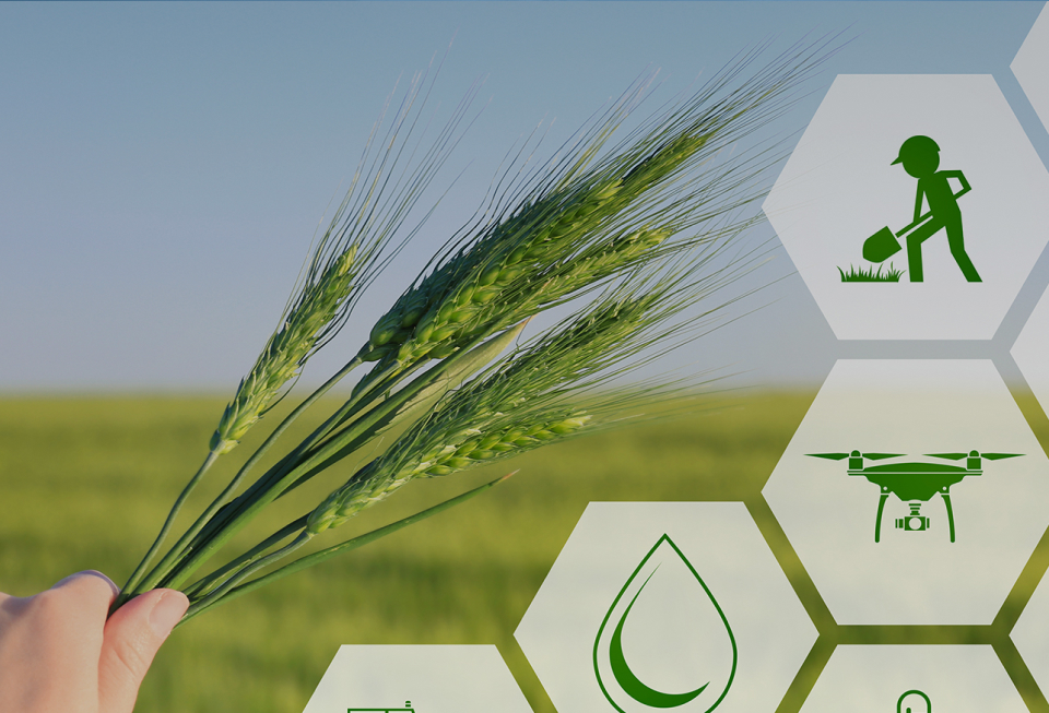 Elementos para la Elaboración de Proyectos Productivos Agrícolas