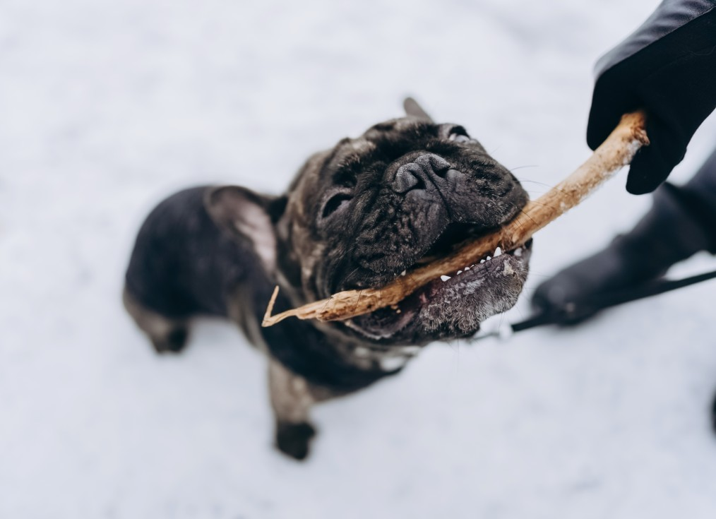 Old Dog with Stick