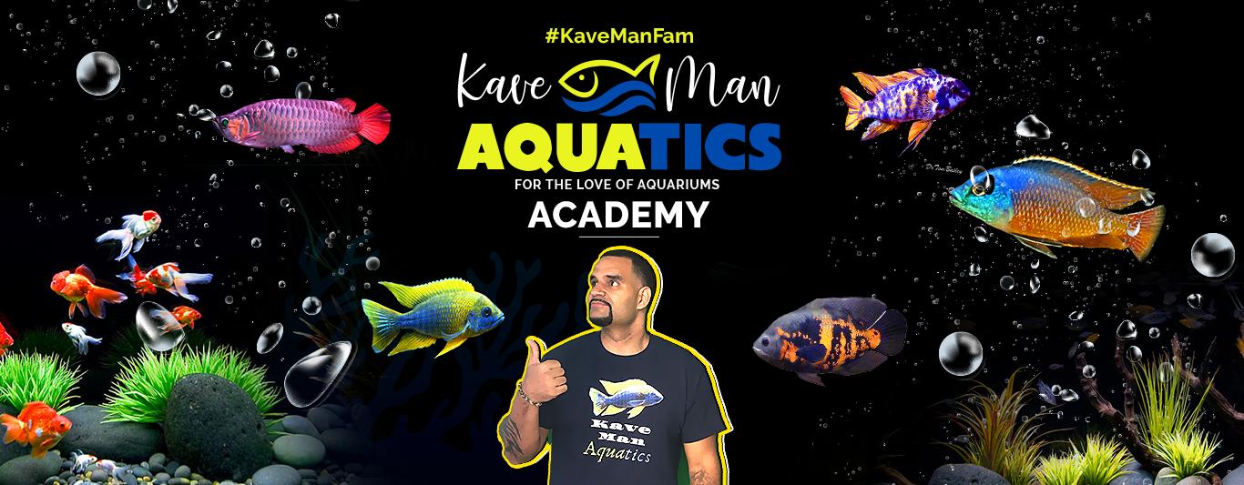 KaveMan Aquatics Academy