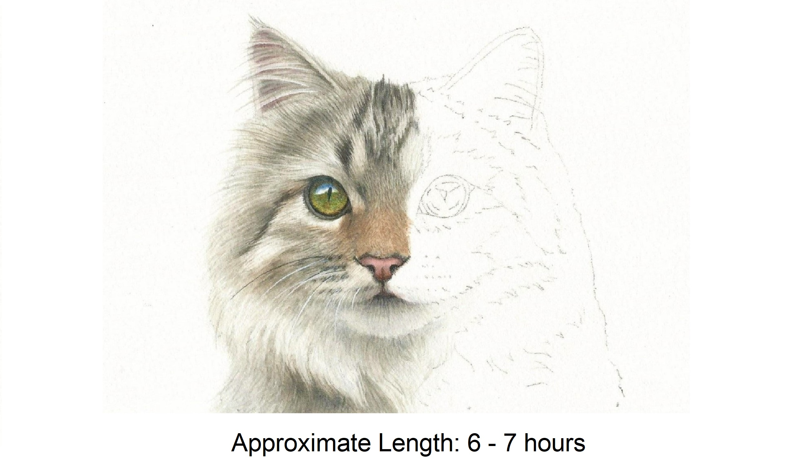 half and half challenge long-haired cat in watercolor by Rebecca Rhodes