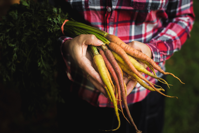 Girl wearing plaid shirt holding freshly picked carrots