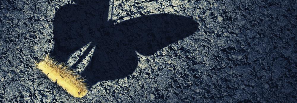 vocazione ispirazione aspirazione altamente sensibile farfalla volare hsp