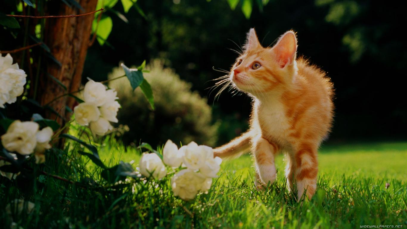 愛猫のために学ぶホメオパシーセルフケアコースVOL.1