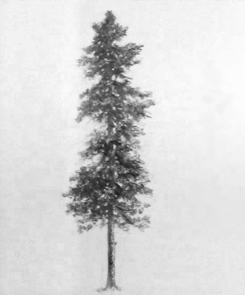 Drawing of a Pine Tree by Kevin McCain