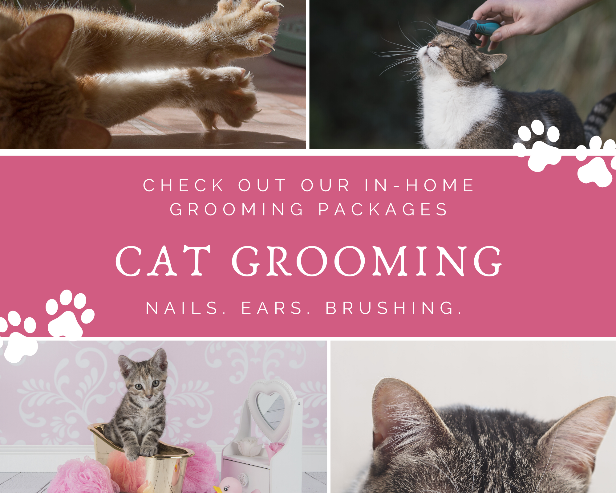 cat grooming services