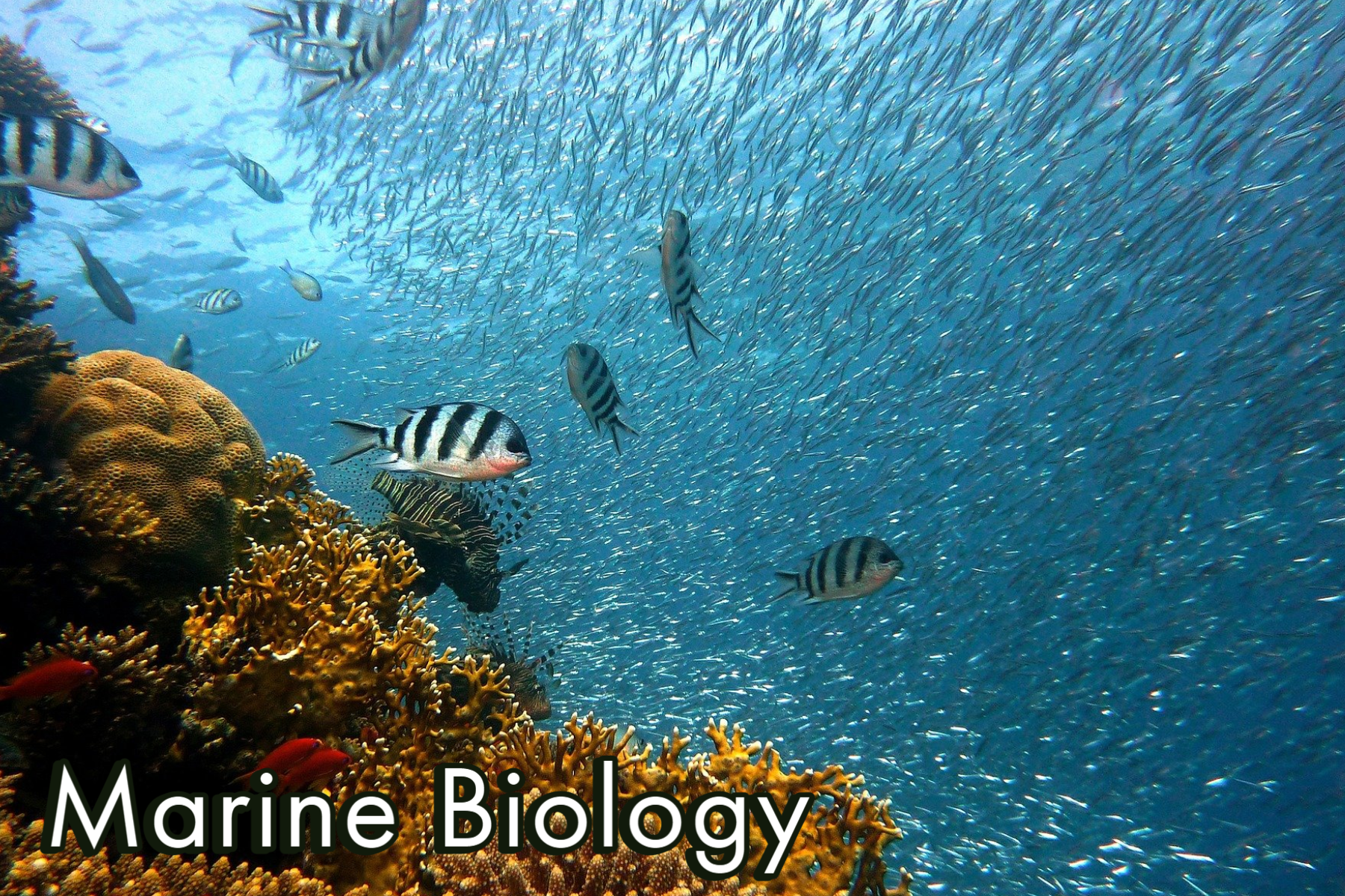 The Biology, Chemistry, and Geology of the Ocean