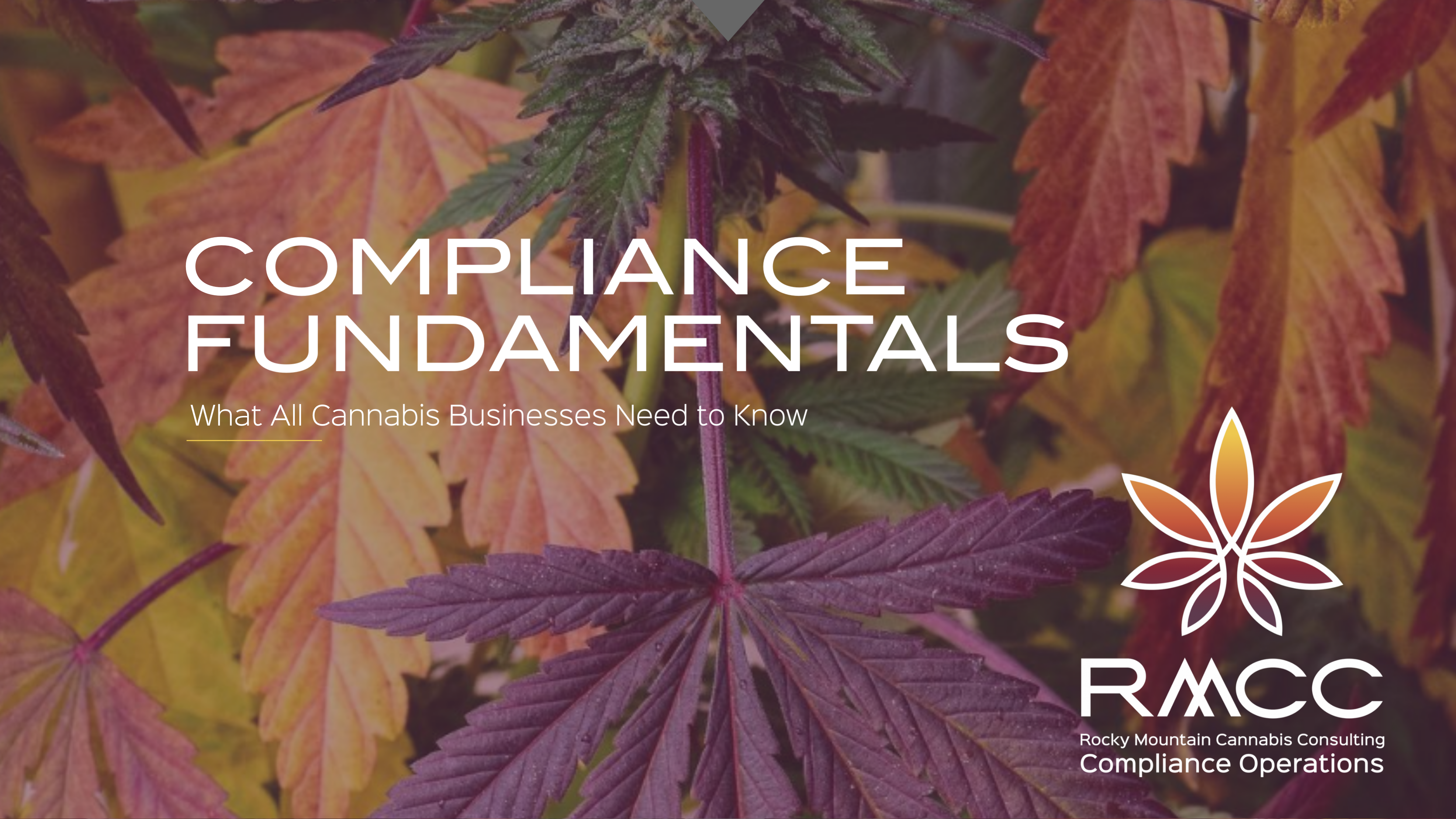 COMPLIANCE FUNDAMENTALS WHAT ALL CANNABIS BUSINESSES NEED TO KNOW