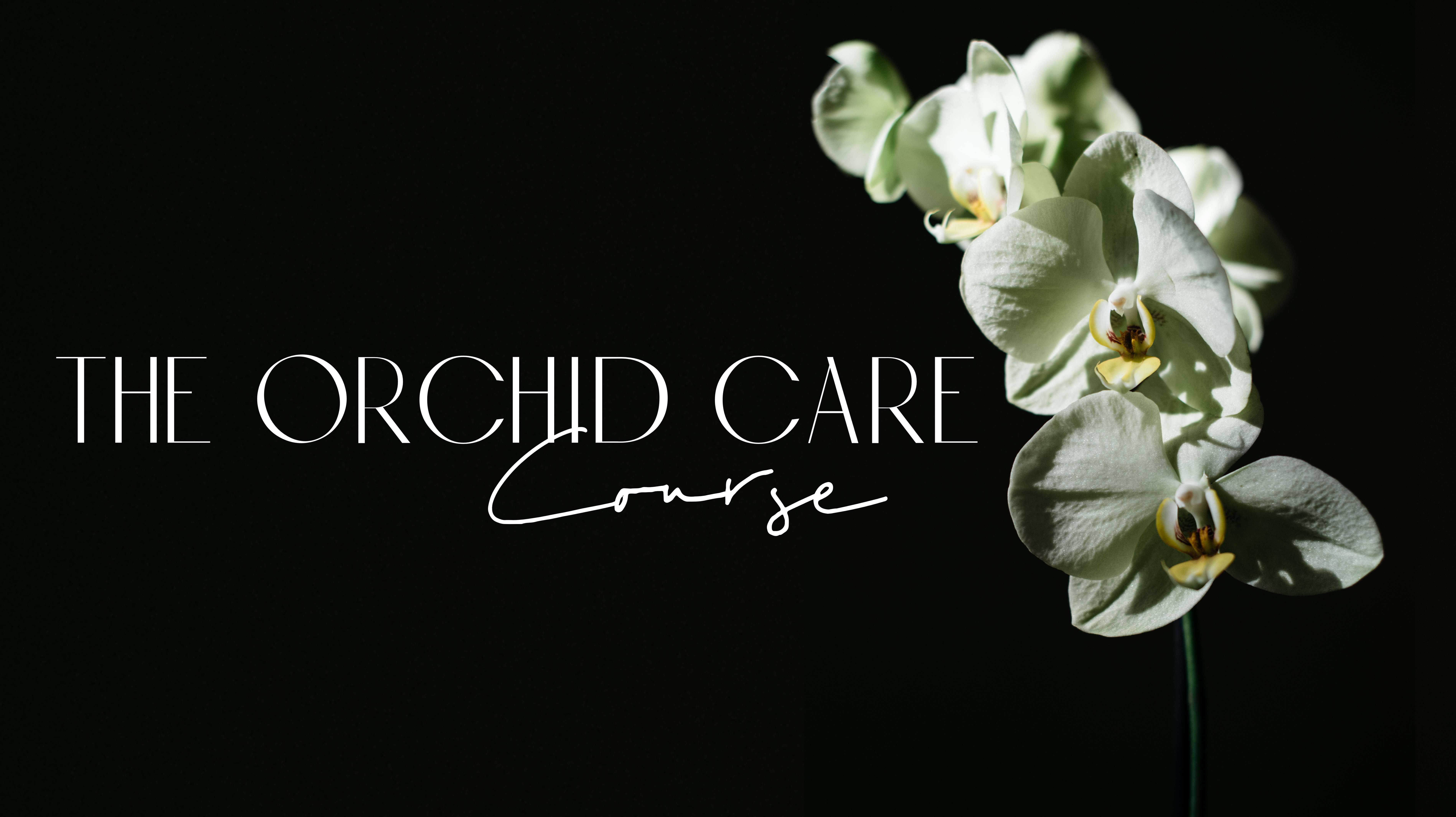 The Orchid Care Course - Everything you need to know to grow orchids at home.